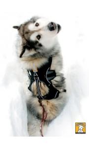 Hondenharnas