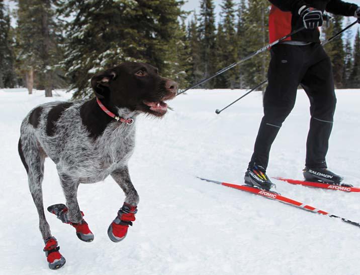 Polar trex hondenschoenen 2 st - Tuinuitleg met kiezelstenen ...